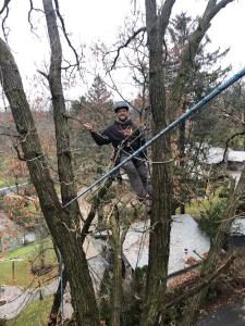 Tree cabling, bracing and supports in Oakland County, Michigan