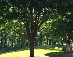 Tree inspections, tree insurance damage, tree surgeon, arborists in Oakland County Michigan