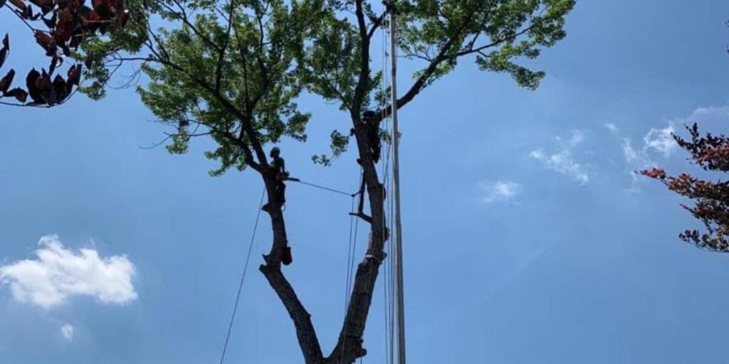 Tree trimming and pruning service ann arbor, michigan