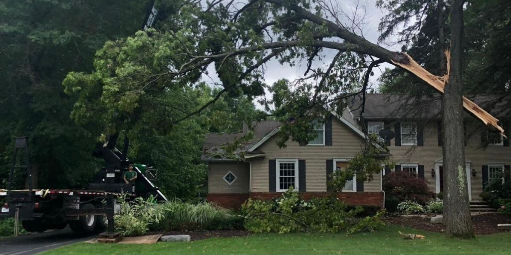 Emergency tree removal service ann arbor michigan