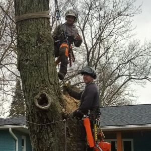Tree Service Bloomfield Michigan