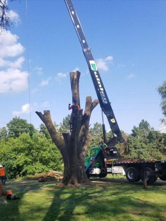 Quinlan Tree Service Crane