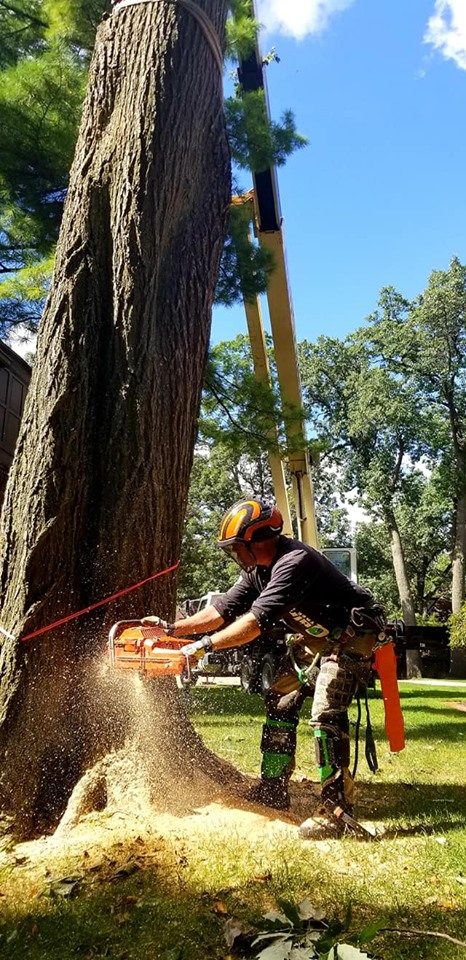 Tree Removal Commerce Township, Michigan by Quinlan Tree Service