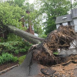 Emergency tree damage and removal in Oakland County, Michigan.