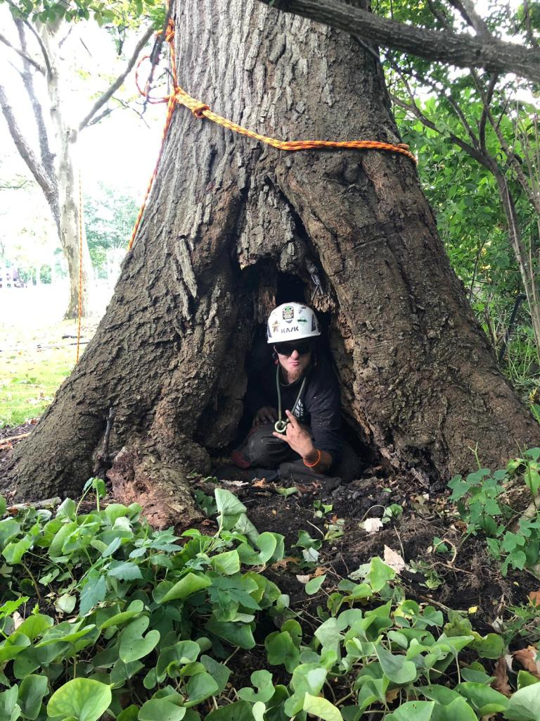 Tree trunk damage and inspection by a professional arborist